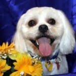 Dog Grooming Noosa - Dog Condition